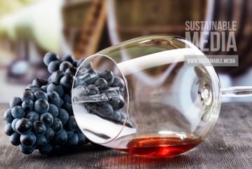 Sting's Biodynamic Winery