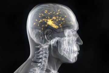 Scientists Create Organic Computer By Interconnecting Rat And Monkey Brains