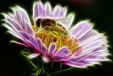 Bees And The Destiny Of Nature